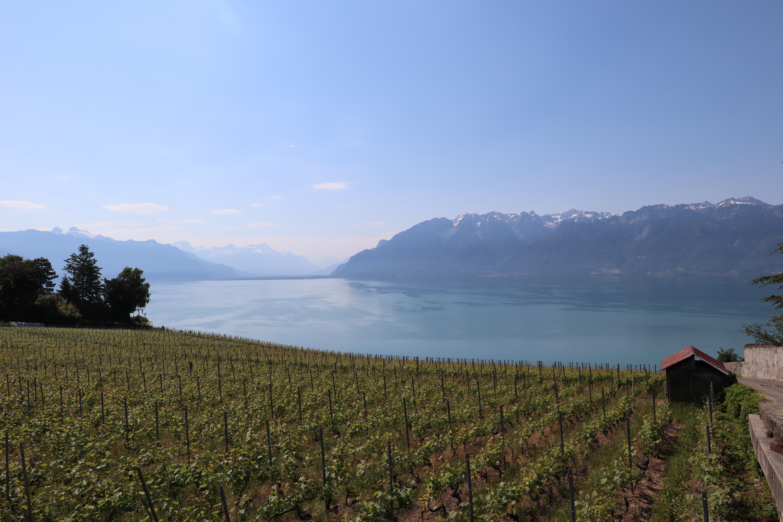 Swiss Wine Festival: The Fête des Vignerons | EU Business School