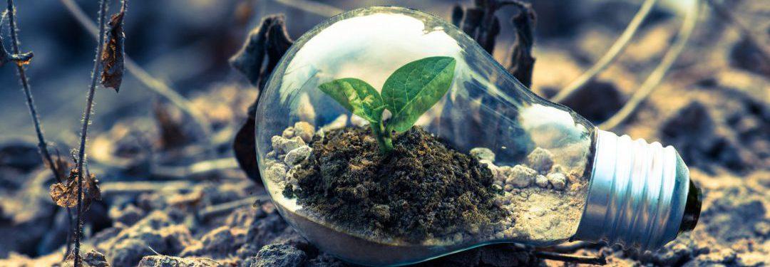 sustainable business ideas